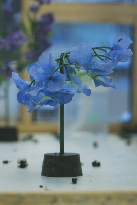 Plant_0226